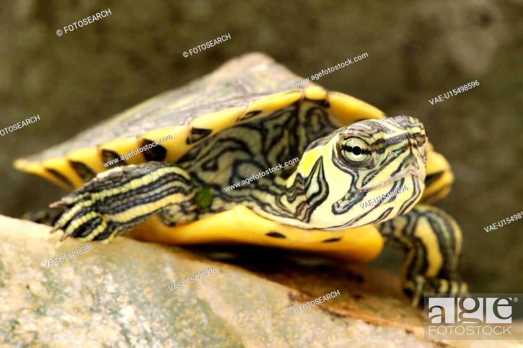Stock Photo: animals, ganzansicht, front, close-up, alfred.