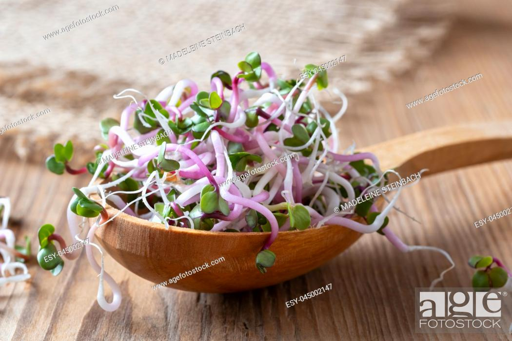Stock Photo: Fresh pink radish sprouts on a wooden spoon.