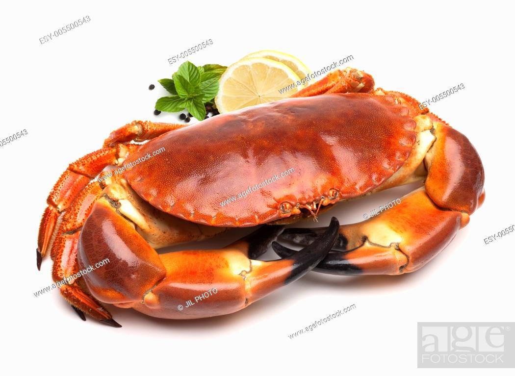 Stock Photo: Cooked edible crab (Cancer pagurus).