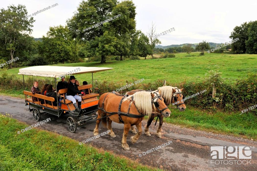 Stock Photo: stroll with a horse-drawn carriage, Pre Fleuri Farm, Sermentizon, Livradois-Forez Regional Nature Park, Puy-de Dome department, Auvergne region, France, Europe.