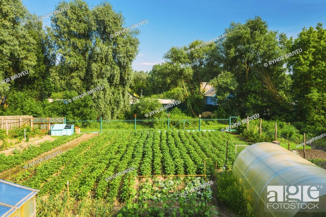 Stock Photo: Elevated View Of Vegetable Garden In Small Town Or Village. Potato Plantation And Greenhouse At Summer Evening. Village Garden Beds.