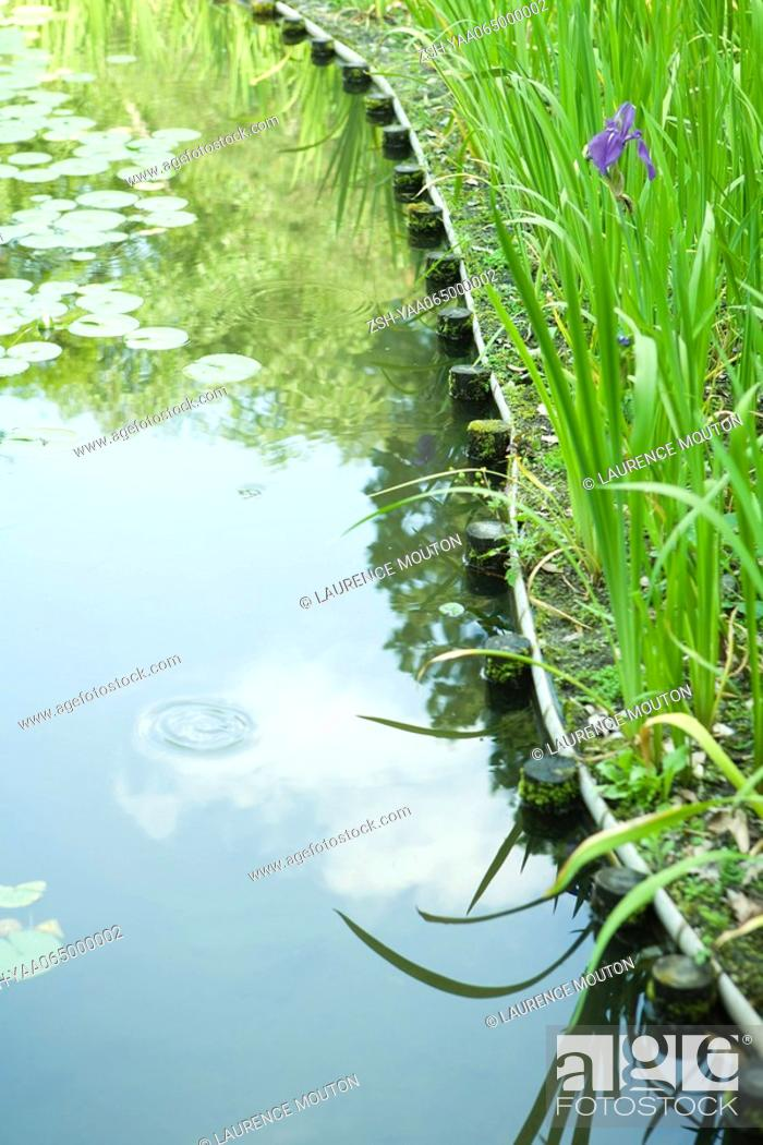 Stock Photo: Pond with lily pads, close-up.