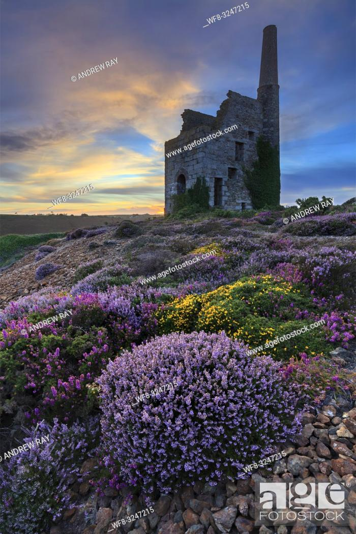 Stock Photo: Tywarnhayle Engine House near Porthtowan in Cornwall, captured at sunset in late August when the heather was in bloom.