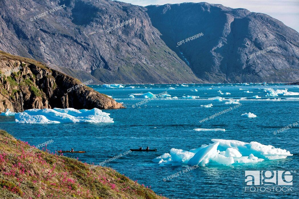 Stock Photo: KAYAKING IN THE MIDDLE OF THE ICEBERGS THAT SEPARATED FROM THE GLACIER, FJORD OF NARSAQ BAY, GREENLAND.