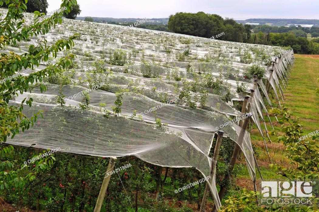Imagen: apple orchard protected by net, near Bourges, Cher department, Centre-Val-de-Loire region, France, Europe.