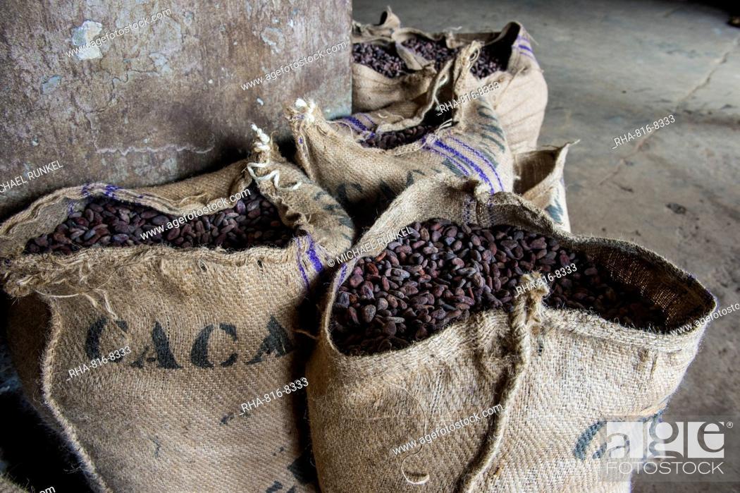 Bags full of cocoa beans, Cocoa plantation Roca Aguaize, East coast