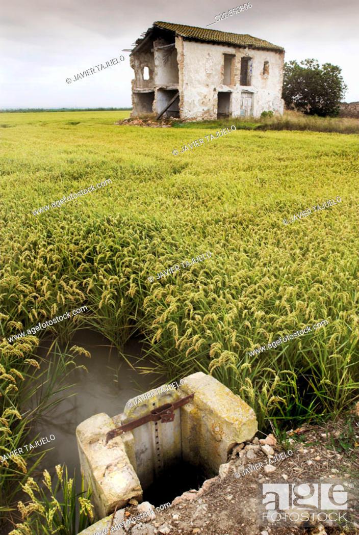 Stock Photo: Abandoned house next to the rice fields. P.N. Albufera de Valencia, Comunidad Valenciana, Spain..