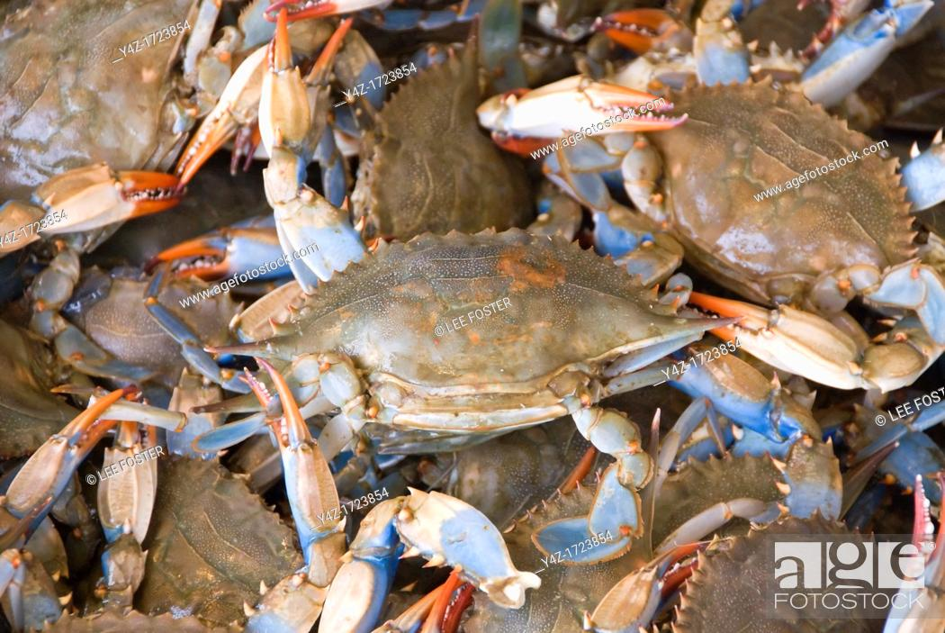 Stock Photo: Washington DC, USA, blue crabs from the Chesapeake at the Maine Avenue Fish Market.