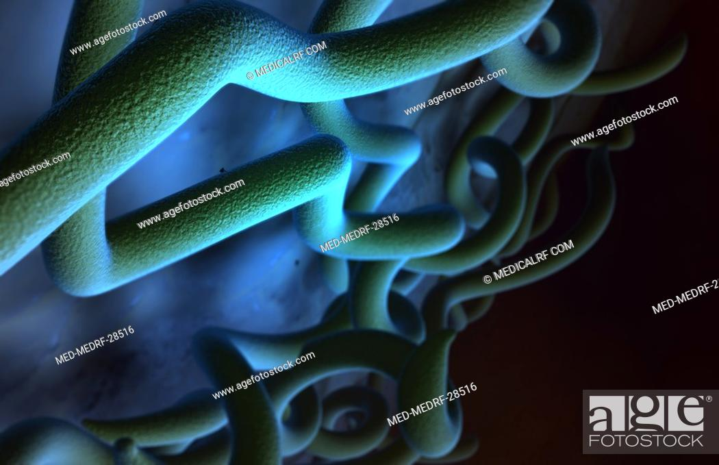 Stock Photo: Lyme disease bacteria.