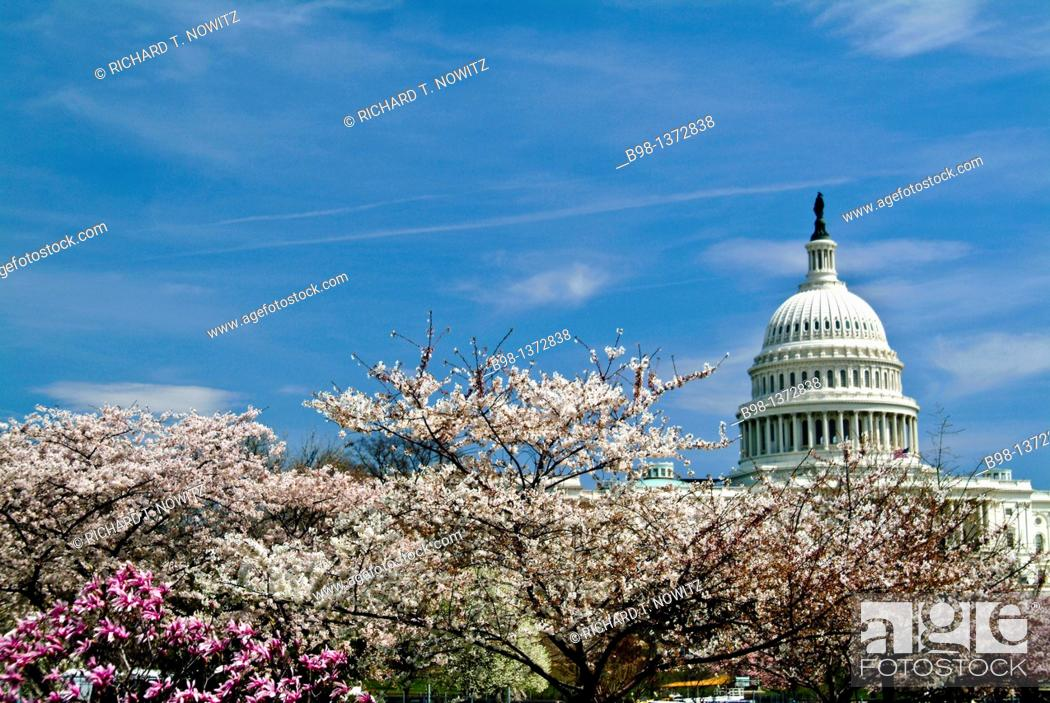 Imagen: United States, Washington, District of Columbia, Spring Flowers and US Capitol Building.