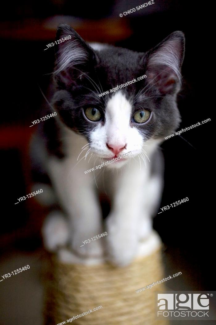 Stock Photo: A kitten stands on a scratch post in Mexico City.