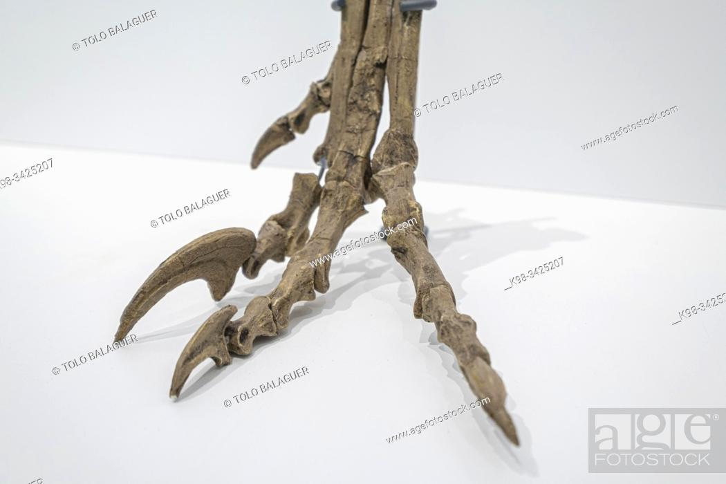 Stock Photo: pie de velociraptor, Centro Paleontológico , Enciso, La Rioja , Spain, Europe.
