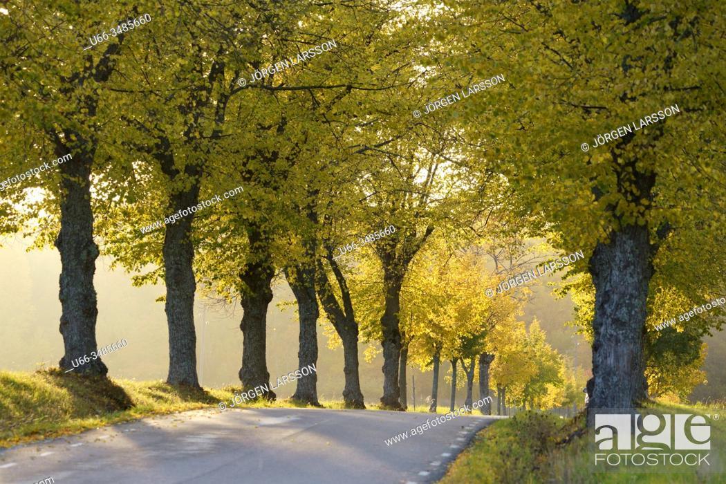 Stock Photo: Avenue, Sturehof, Botkyrka, Sweden.