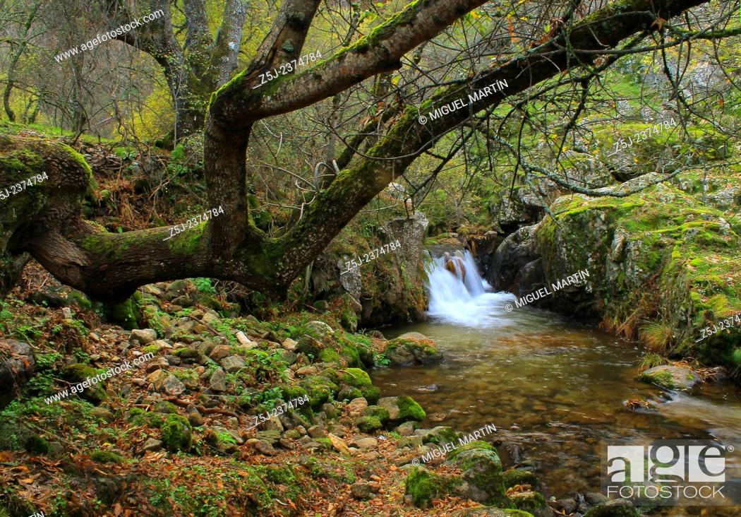 Stock Photo: An old tree leans on a large puddle in the Aguilón river, beside the path leading to the El Purgatorio falls at the Guadarrama Summits national park boundaries.