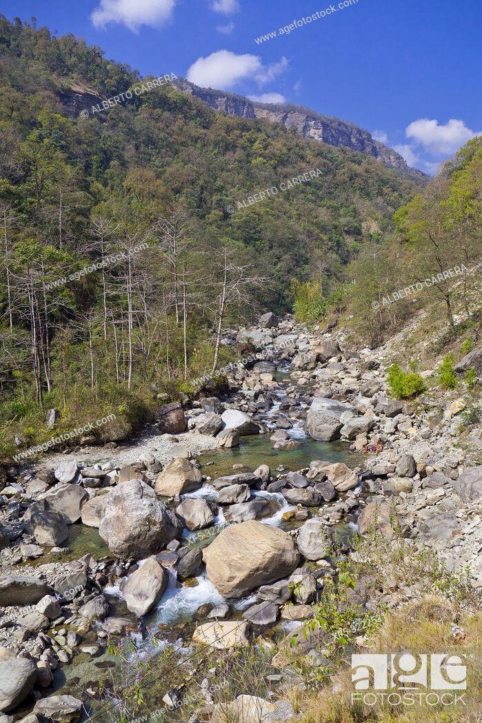 Imagen: Forest River, Trek to Annapurna Base Camp, Annapurna Conservation Area, Himalaya, Nepal, Asia.
