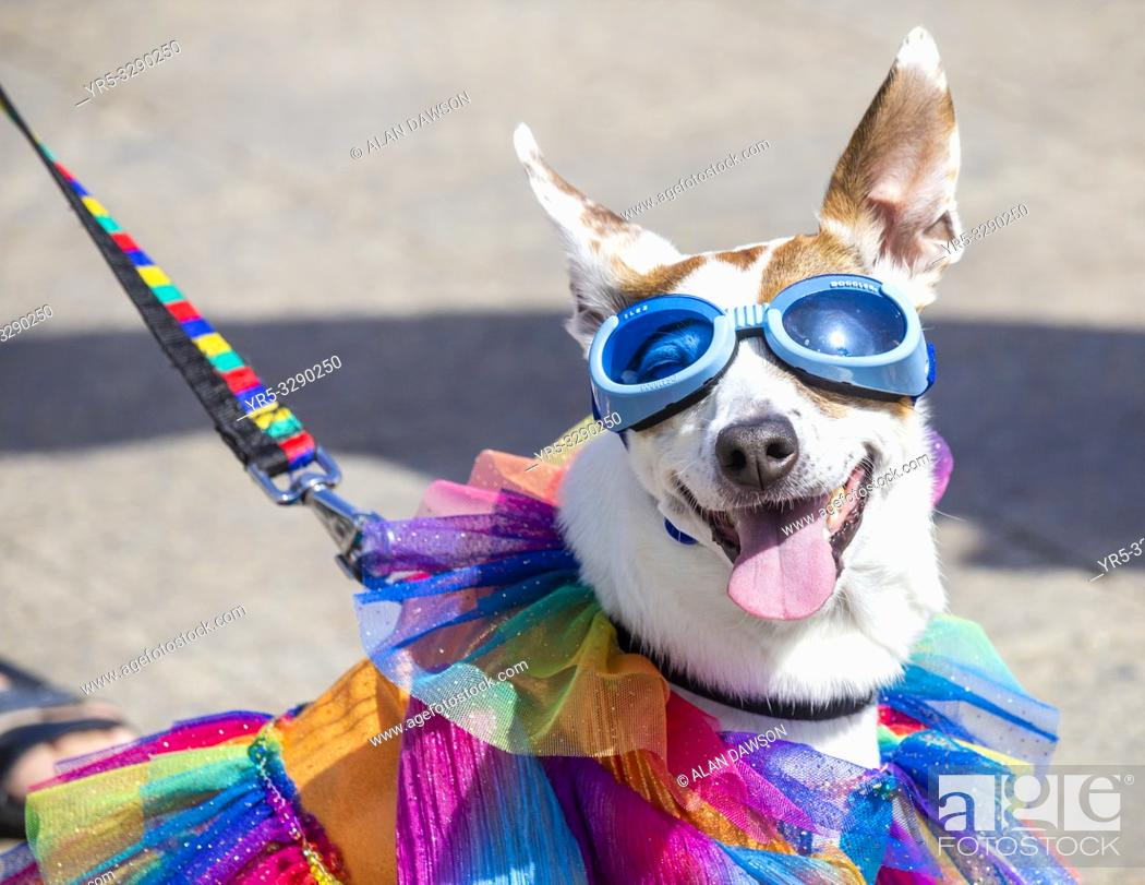 Stock Photo: Las Palmas, Gran Canaria, Canary Islands, Spain. 24th February, 2019. Dog fancy dress competition day at the Las Palmas carnival on Gran Canaria.