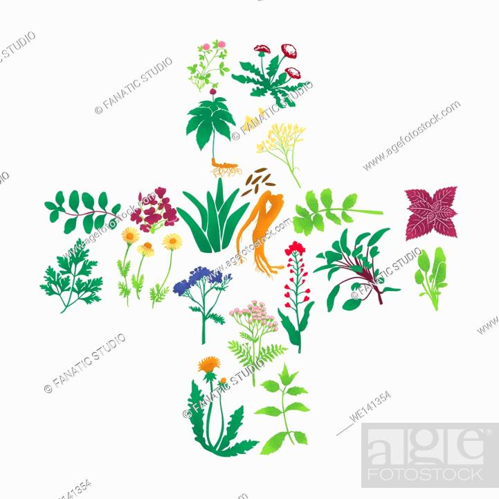 Stock Photo: Illustrations of herbal plants on white background.