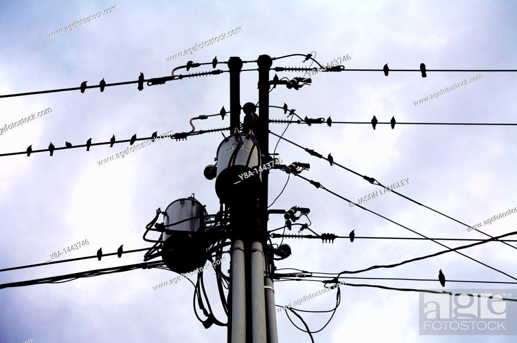 Stock Photo: Sihlouettes of birds perched on utility wires  Kansas, United States.