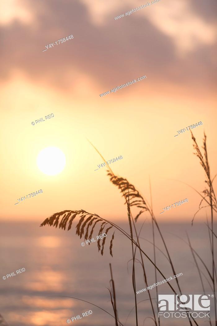 Stock Photo: Sea oats at sunrise. Palm Beach, FL, USA.