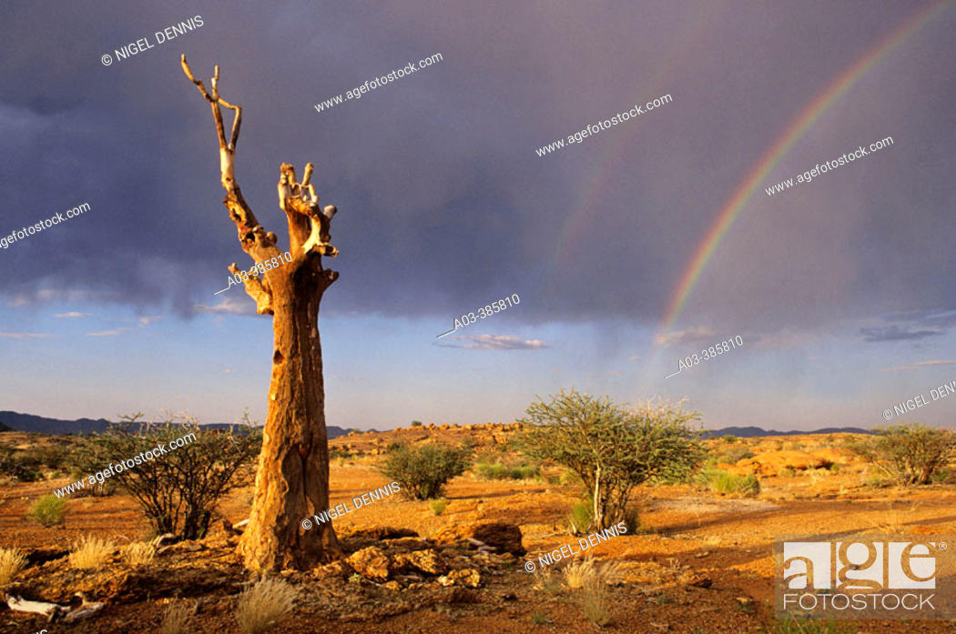 Stock Photo: Quiver Tree and rainbow. Augrabies Falls National Park. Northern Cape, South Africa.