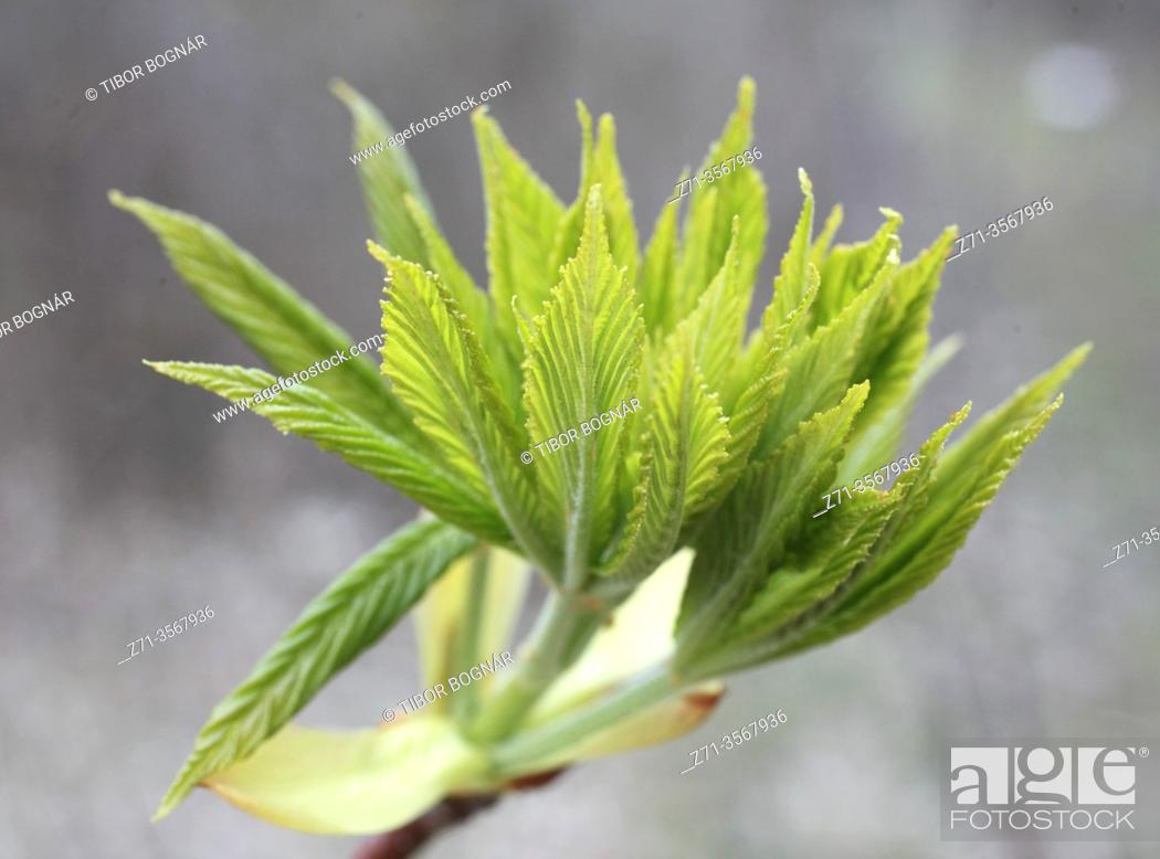 Stock Photo: Spring, plant, shoot, leaves, .