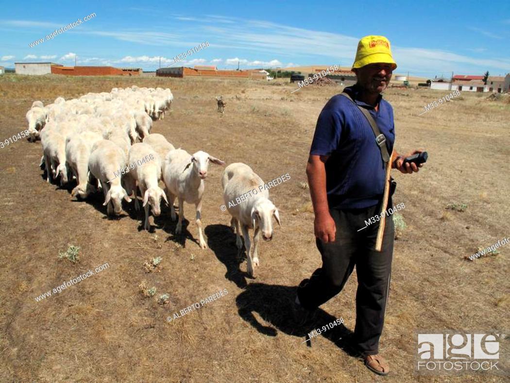 Stock Photo: Shepherd with flock of sheeps. Zamora province, Castilla-Leon, Spain.