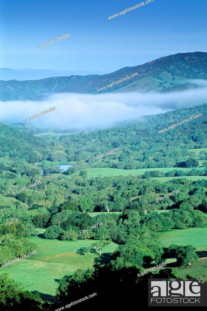 Stock Photo: Morning fog over oak trees and valley in spring, Adelaida Road, Paso Robles, San Luis Obispo County, California.