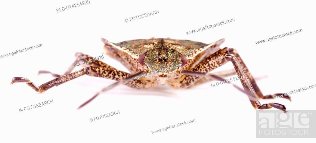 Stock Photo: Macro of a bug.
