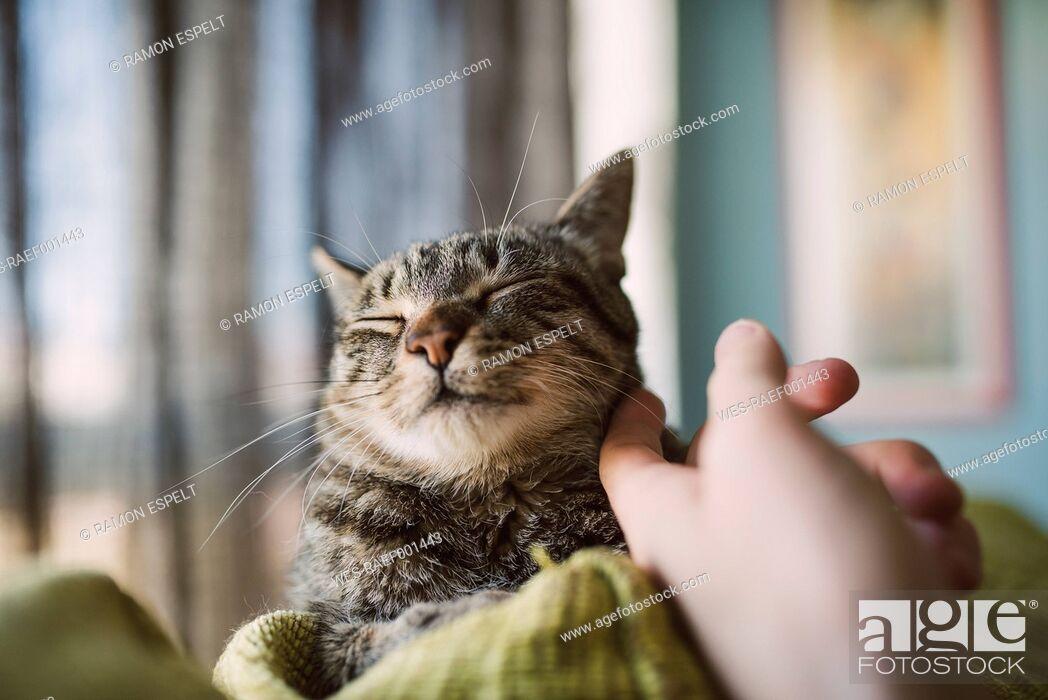 Imagen: Hand of man stroking tabby cat.