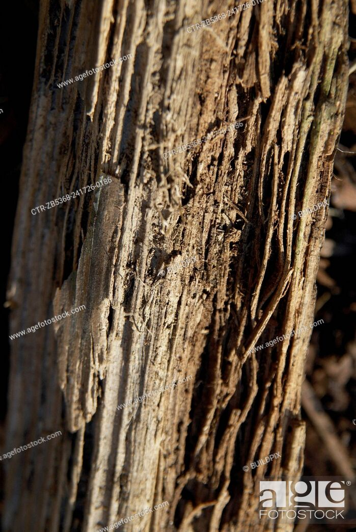 Imagen: Timber with white rot under humid condition.