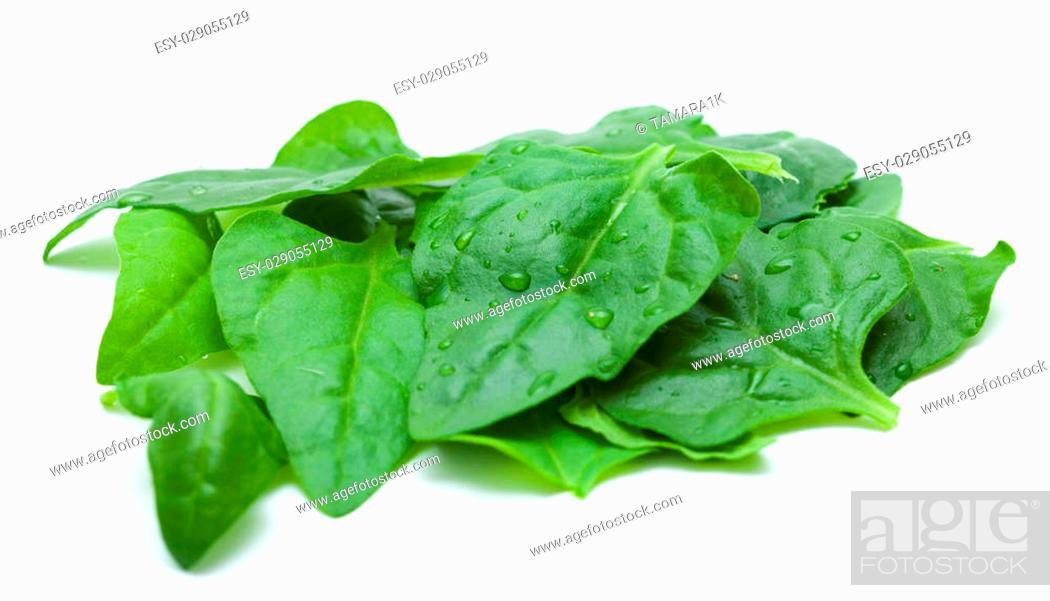 Photo de stock: Tetragonia tetragonioides, New Zealand spinach, isolated on white.
