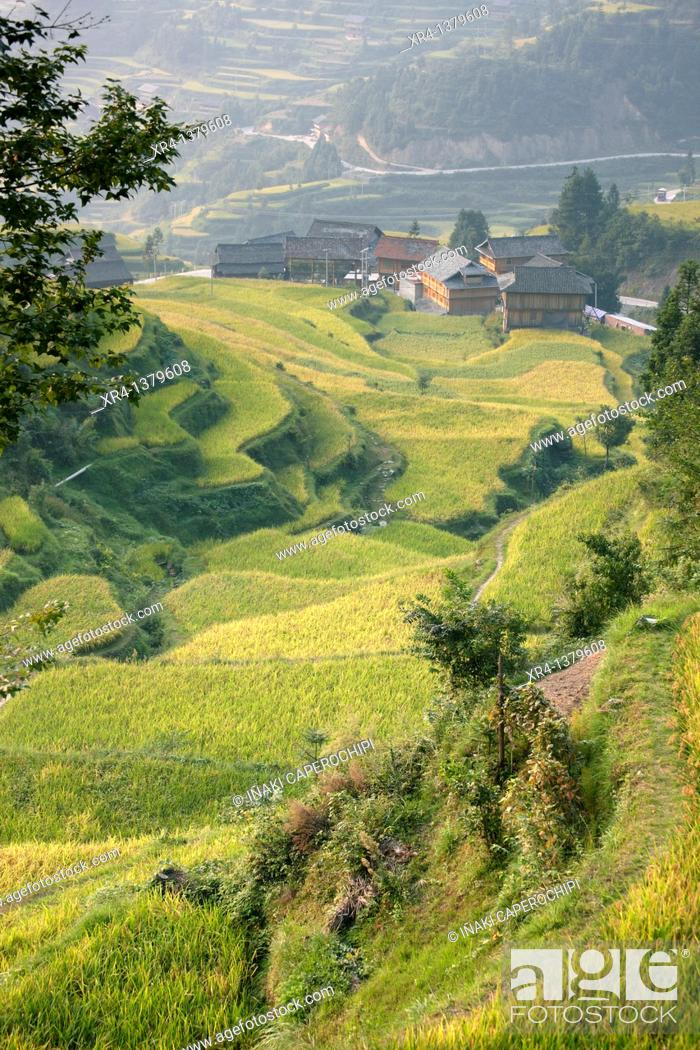 Stock Photo: Terraces and rice paddies, Tang an Dong Village, Tang an, Guizhou, China.