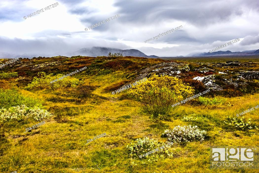 Imagen: Nature of Þingvellir National Park, Southwest Iceland.