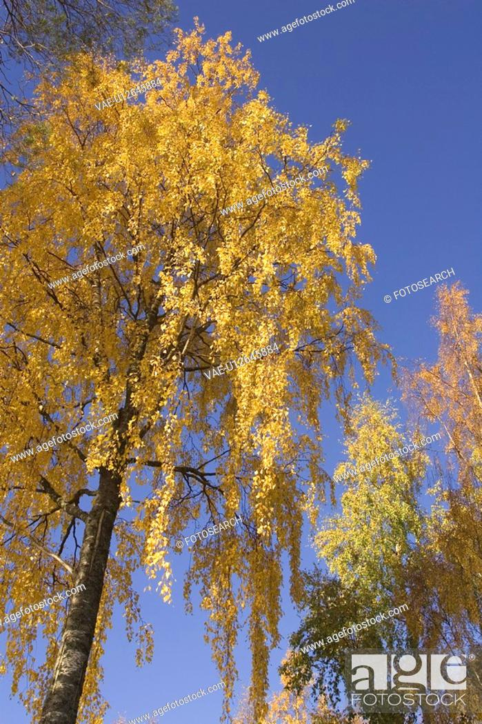 Stock Photo: Branch, Day, Generic Location, Golden, Leaves.