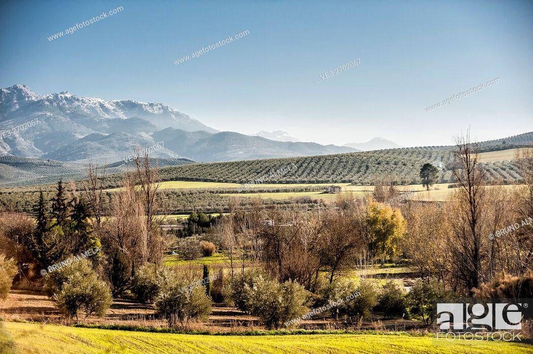 Imagen: View of olive fields near Cazorla in western slope of Cazorla mountain range in Sierras de Cazorla, Segura y las Villas Natural Park (Jaén Province.