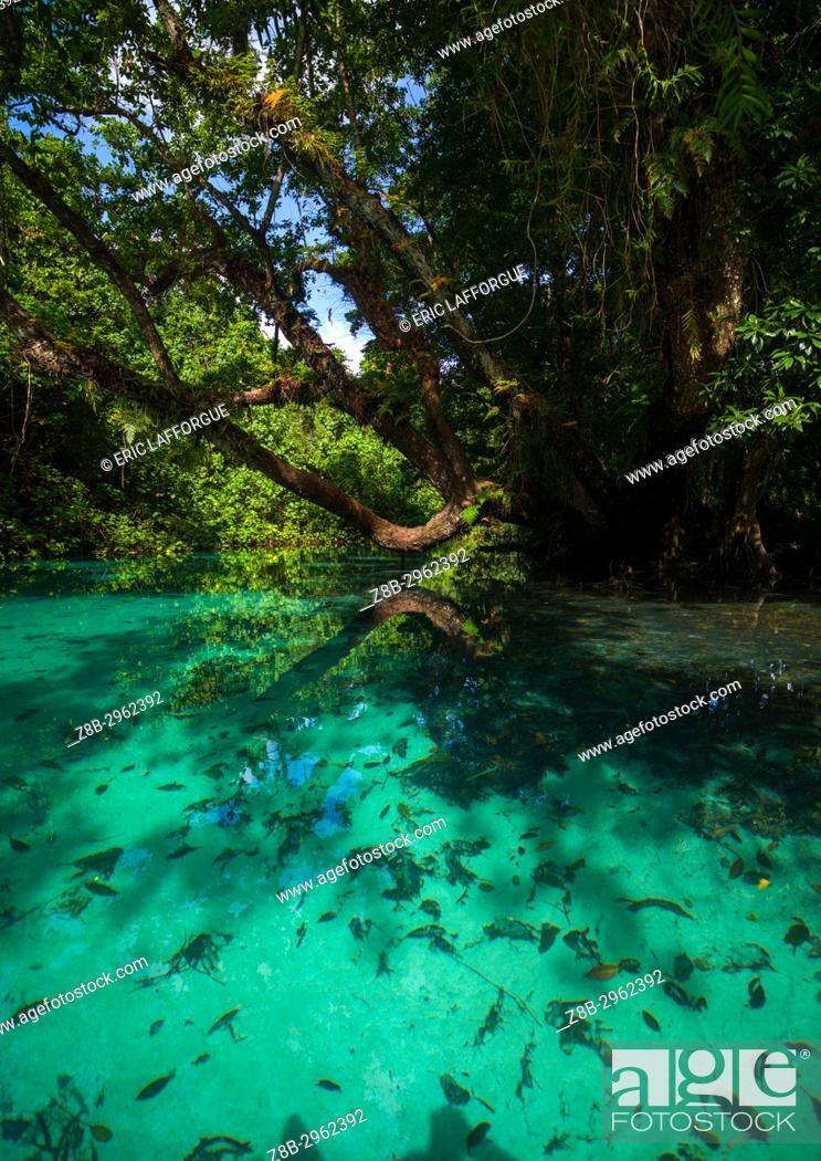 Stock Photo: Green water river, Sanma Province, Espiritu Santo, Vanuatu.
