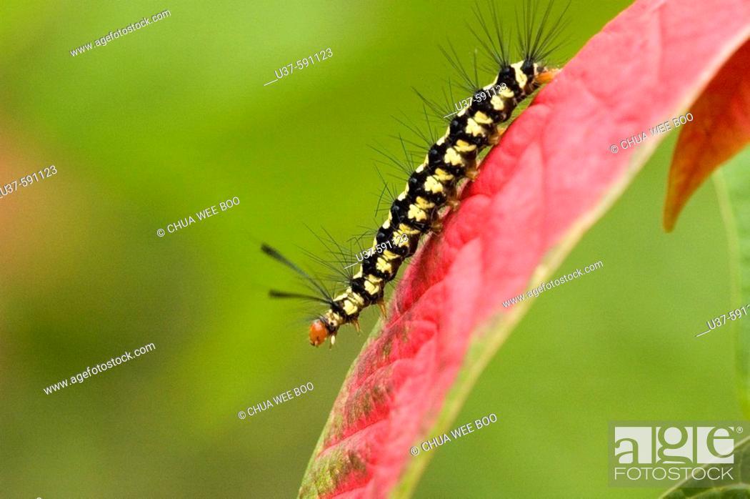 Stock Photo: Caterpillar on the run.