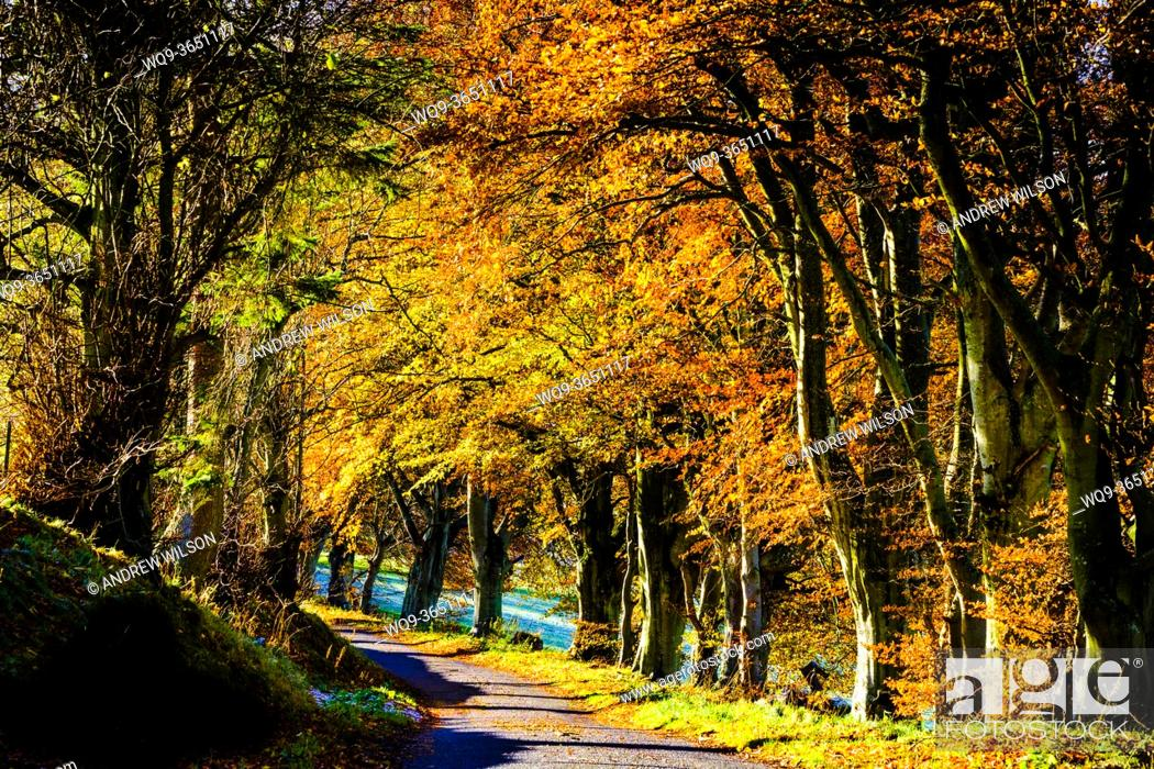 Stock Photo: Sunshine on trees in autumn colour in the Scottish Borders.