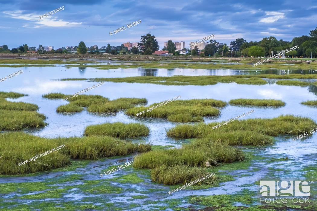 Stock Photo: Santoña, Victoria and Joyel Marshes Natural Park. Colindres, Cantabria, Spain, Europe.