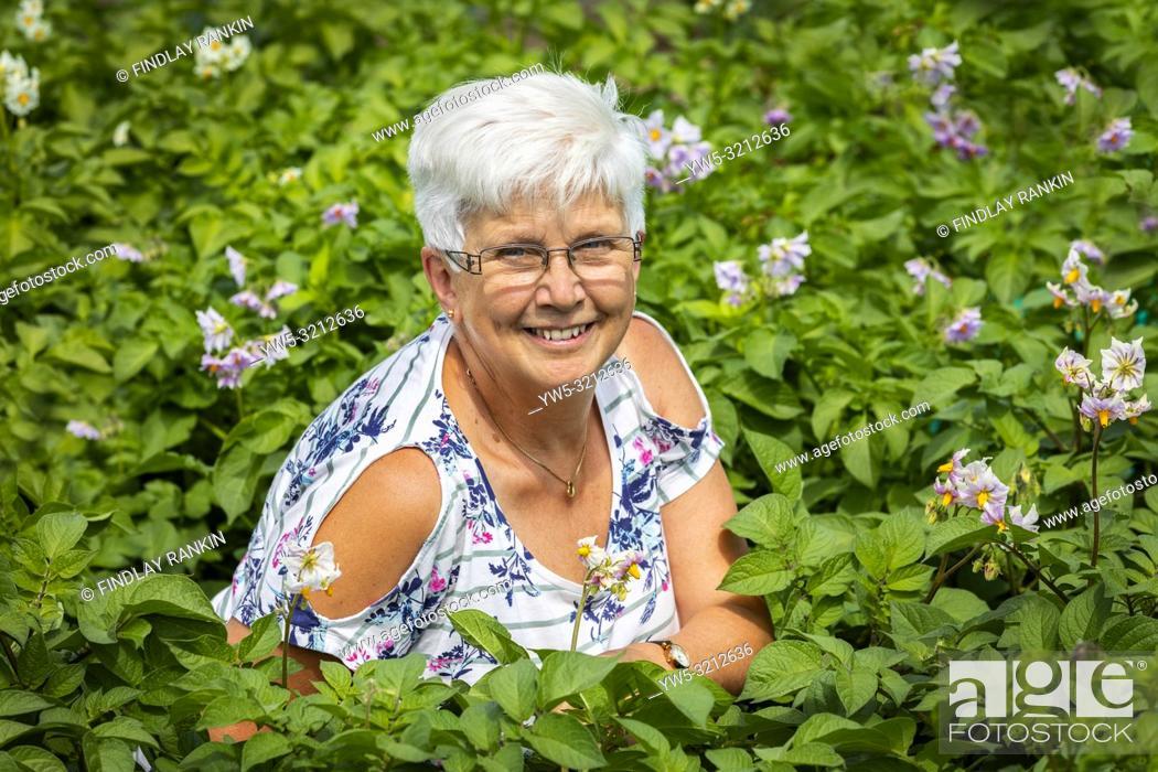 Stock Photo: Image of JEAN BROWN, plot 19b sitting in a bed of potato flowers, Eglinton Gardens, Kilwinning, Eglinton Growers Allotments, Kilwinning, Ayrshire, Scotland, UK.