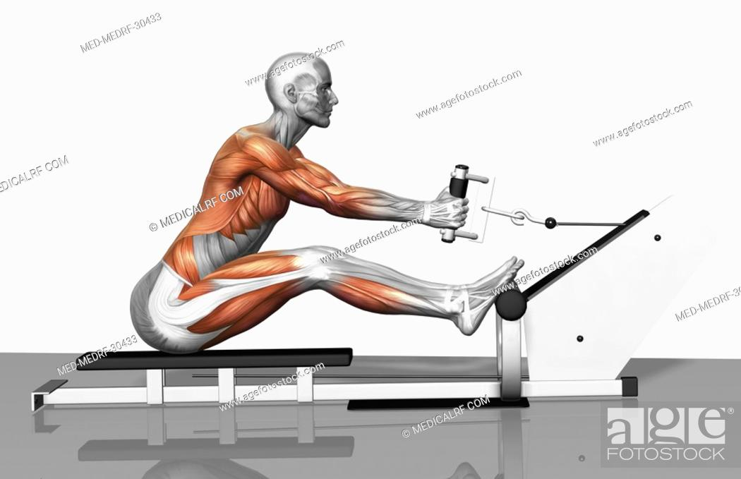Stock Photo: Cable row exercise Part 2 of 2.