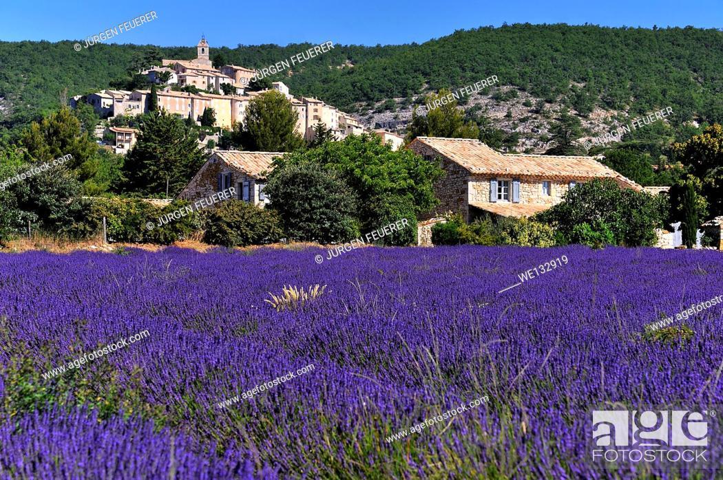 Stock Photo: Village Banon and fields of Lavender, Lavandula angustifolia, Banon, Provence, France.