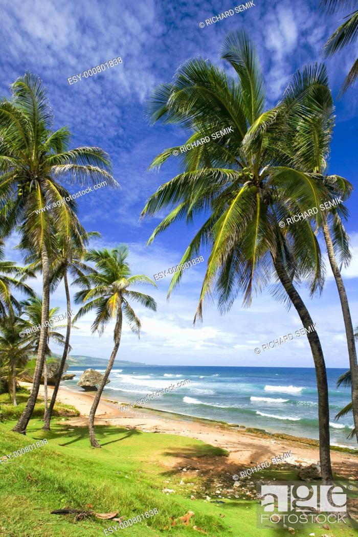 Stock Photo: Bathsheba, Eastern coast of Barbados, Caribbean.