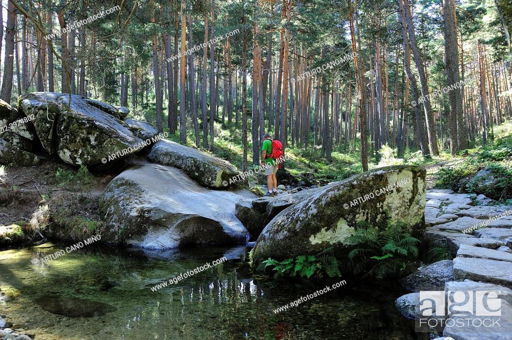Stock Photo: The Pesquerias Reales of King Charles III is a way at side of river Eresma. Sierra de Guadarrama National Park. Segovia Province, Spain.