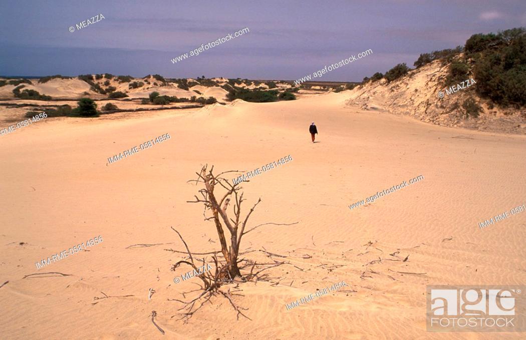 Imagen: Sand dune, man walking , Maio, Cape Verde, Africa.