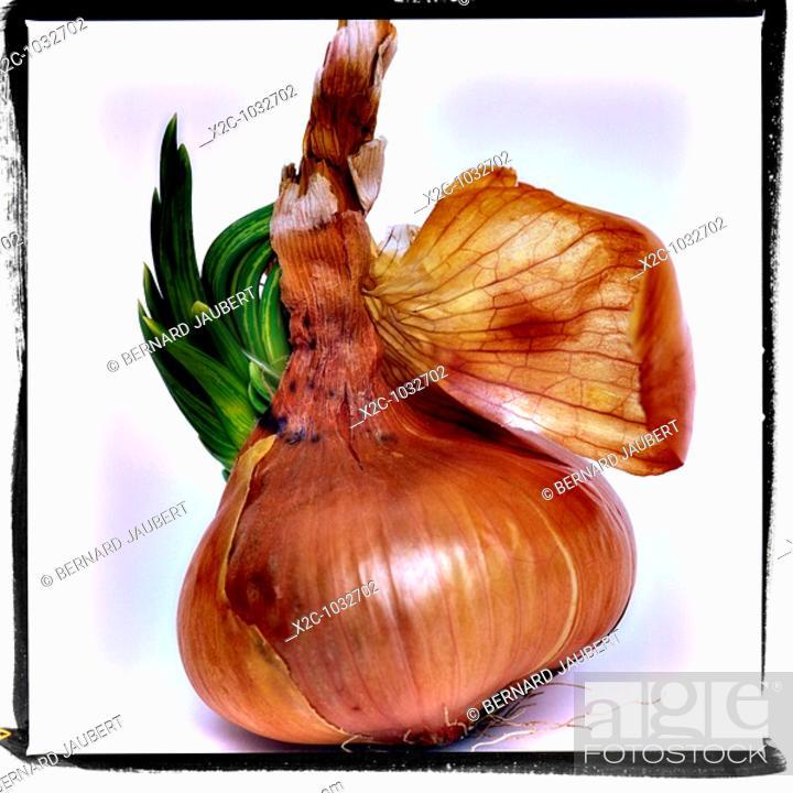 Stock Photo: Garlic.