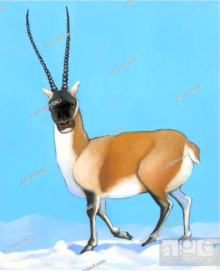 Stock Photo: An illustration of a tibetan antelope.