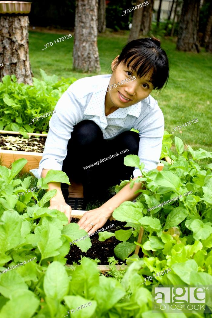 Stock Photo: Working in a small raised garden.