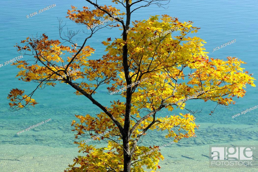 Stock Photo: Maple trees along the shore of Lake Mindemoya, Manitoulin Island, Ontario, Canada.