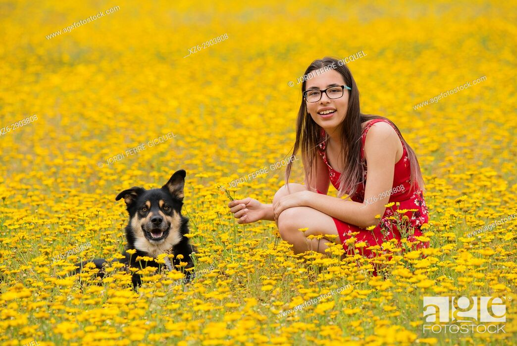 Stock Photo: Girl with a red dress with a dog in a yellow field.